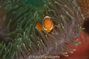 I particularly liked the colour contrasts of the anemone ... by Paul Flandinette 
